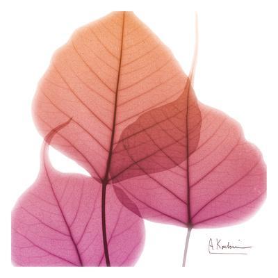 https://imgc.artprintimages.com/img/print/bo-tree_u-l-f7tzsv0.jpg?p=0