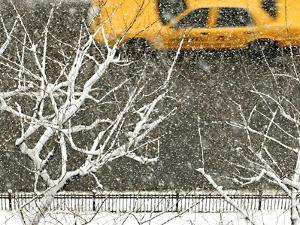 Yellow cab on Park Avenue in a snowstorm by Bo Zaunders