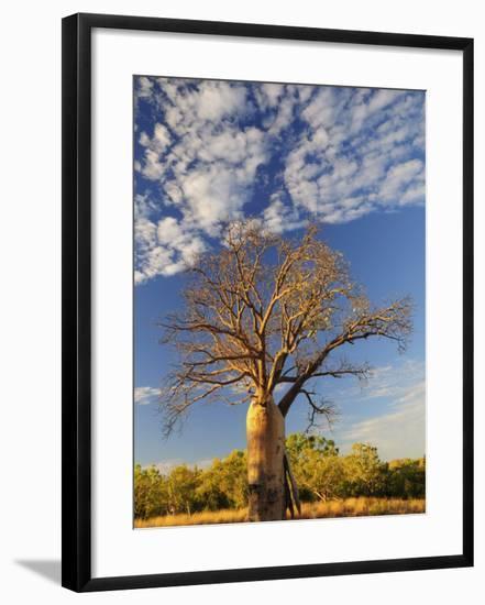 Boab Tree, Kimberley, Western Australia, Australia, Pacific-Schlenker Jochen-Framed Photographic Print