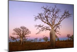 Boabs Bushland