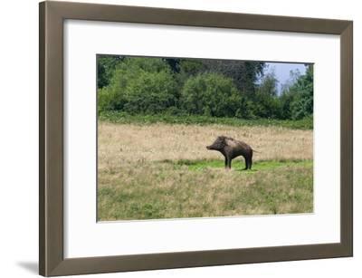Boar/Hog Willow Sculpture in Meadow