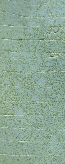 Boardwalk VI-Grant Louwagie-Art Print