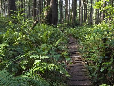 Boardwalk Winds Through the Forest, Olympic National Park, Washington-Konrad Wothe-Photographic Print