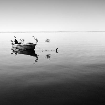 Boat and Heron II-Moises Levy-Photographic Print