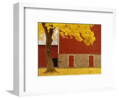 Autumn Tree by Red Barn