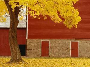 Autumn Tree by Red Barn by Bob Krist