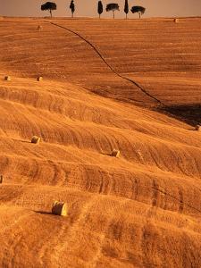 Bales in Rolling Fields by Bob Krist