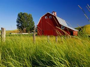 Red Barn in Long Grass by Bob Krist