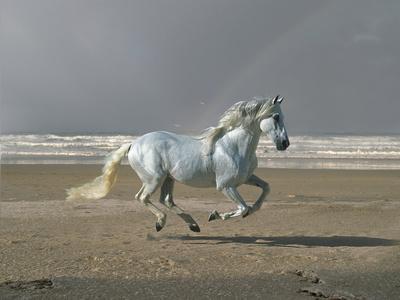 Dream Horses 003