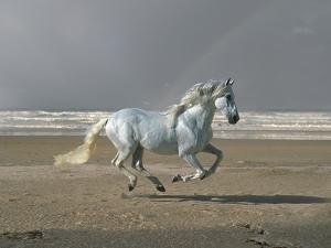 Dream Horses 003 by Bob Langrish