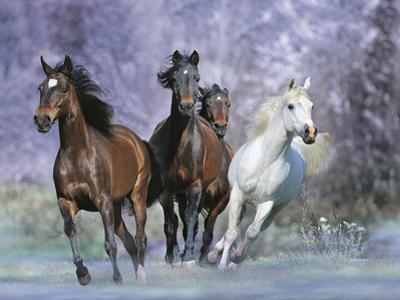 Dream Horses 027 by Bob Langrish