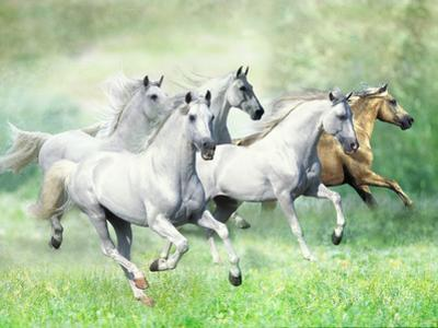 Dream Horses 028 by Bob Langrish