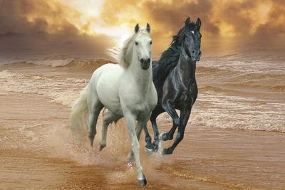 Dream Horses 046