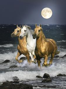 Dream Horses 068 by Bob Langrish