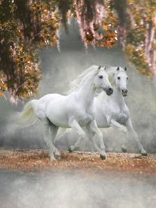 Dream Horses 072 by Bob Langrish