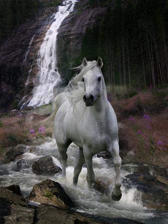 Dream Horses 084