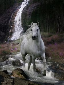 Dream Horses 084 by Bob Langrish