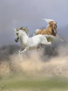 Dream Horses 088 by Bob Langrish