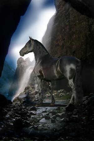 Dream Horses 089 by Bob Langrish