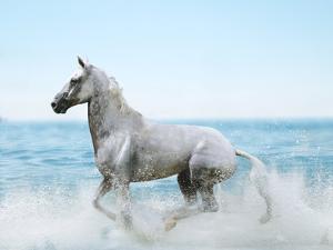 Dream Horses 092 by Bob Langrish