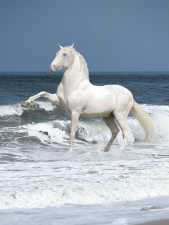 Dream Horses 103 by Bob Langrish