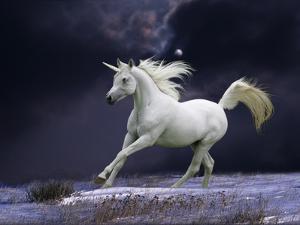 Unicorn 56 by Bob Langrish