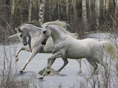 Unicorn 57