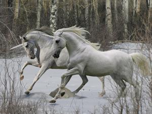 Unicorn 57 by Bob Langrish