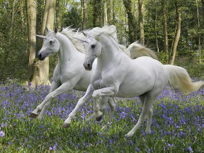 Unicorn 59
