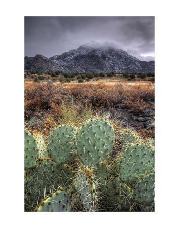 Cactus Overcast