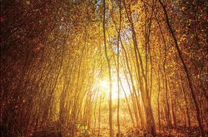 Finding Fall by Bob Larson