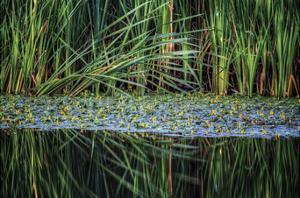 Splitting Reeds by Bob Larson