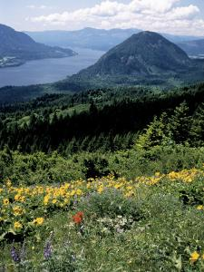Columbia River Gorge, Gifford Pinchot Nf, WA by Bob LeRoy
