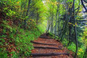 Appalachian Trail 3 by Bob Rouse