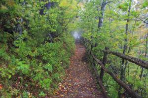 Appalachian Trail by Bob Rouse