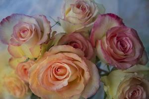 Bunch of Roses by Bob Rouse