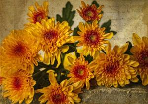 Mums on a Wall by Bob Rouse