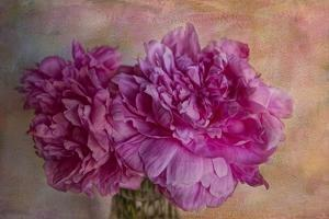 Peonies by Bob Rouse