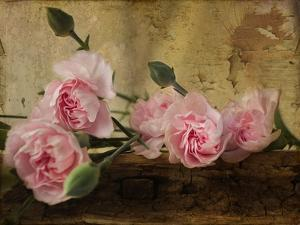 Pink Carnations by Bob Rouse