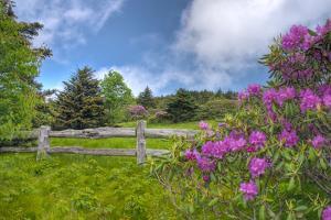 Roan Mountain by Bob Rouse