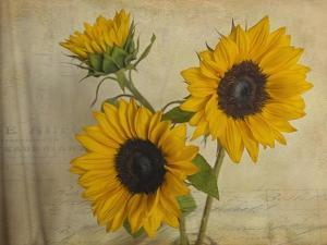 Sunflowers II by Bob Rouse