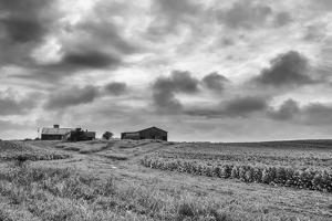 Tobacco Field BW by Bob Rouse