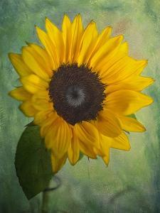 Yellow Sunflower by Bob Rouse