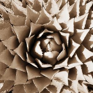 Desert Plants II by Bob Stefko