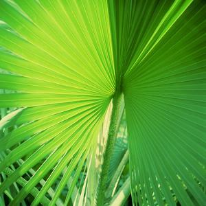 Palm Frond II by Bob Stefko