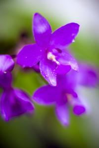 Purple Orchid I by Bob Stefko