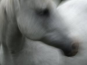 A White Horse by Bob Winsett