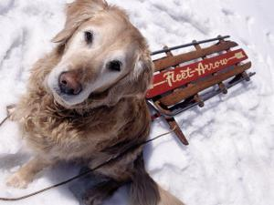 Dog and Old Sled, Breckenridge, CO by Bob Winsett