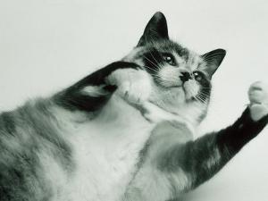 Gringa the Cat by Bob Winsett