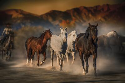 Mustangs on the Move
